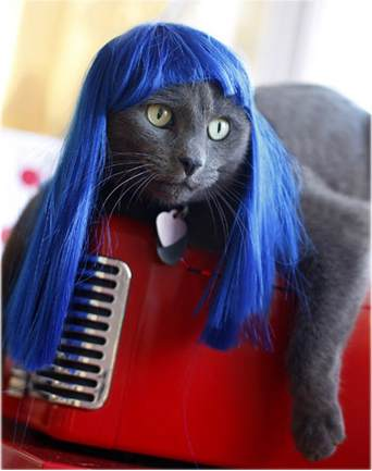 Electric Blue Kitty Wigs