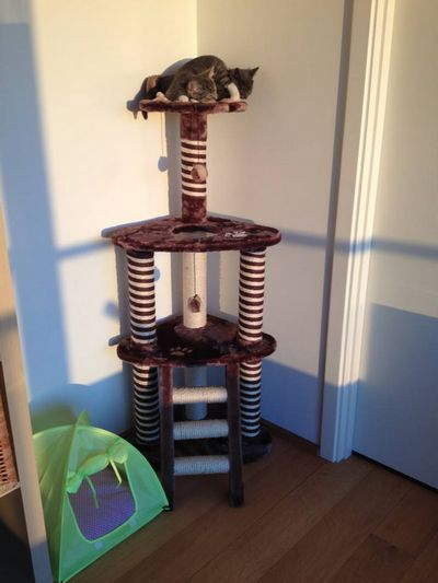 Django And Pebbles On The Scratching Post