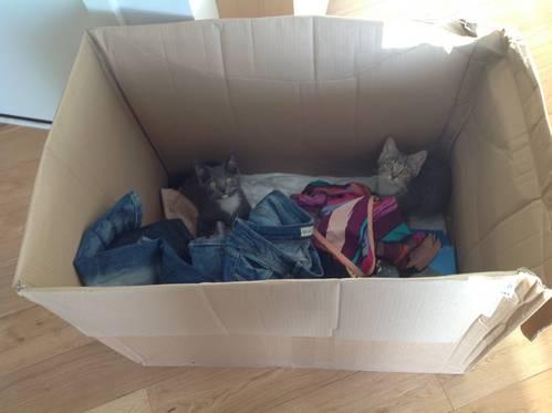 Pebbles & Django In A Box