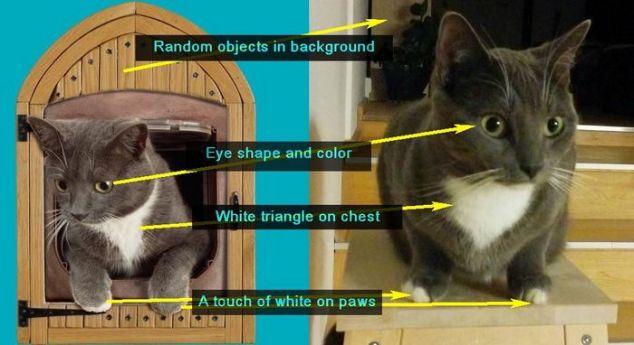 Django Vs Internet Cat