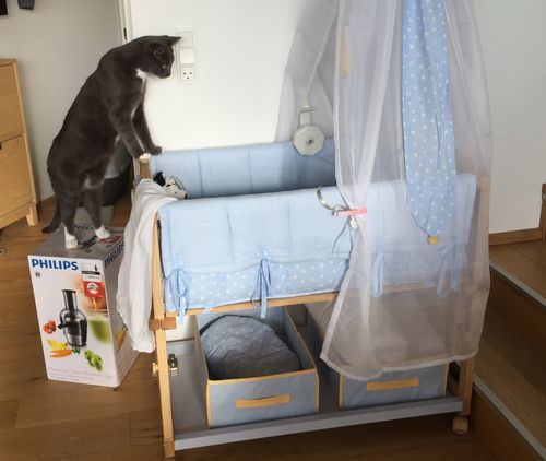 Cat and crib