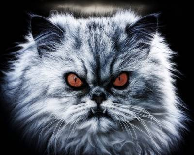 Antichrist signs: Scary cat red eyes