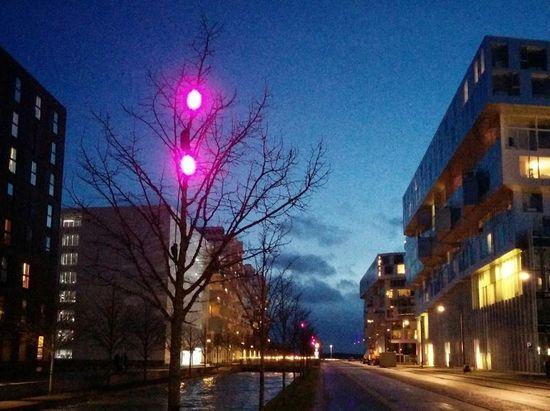 Christmas lights on our street